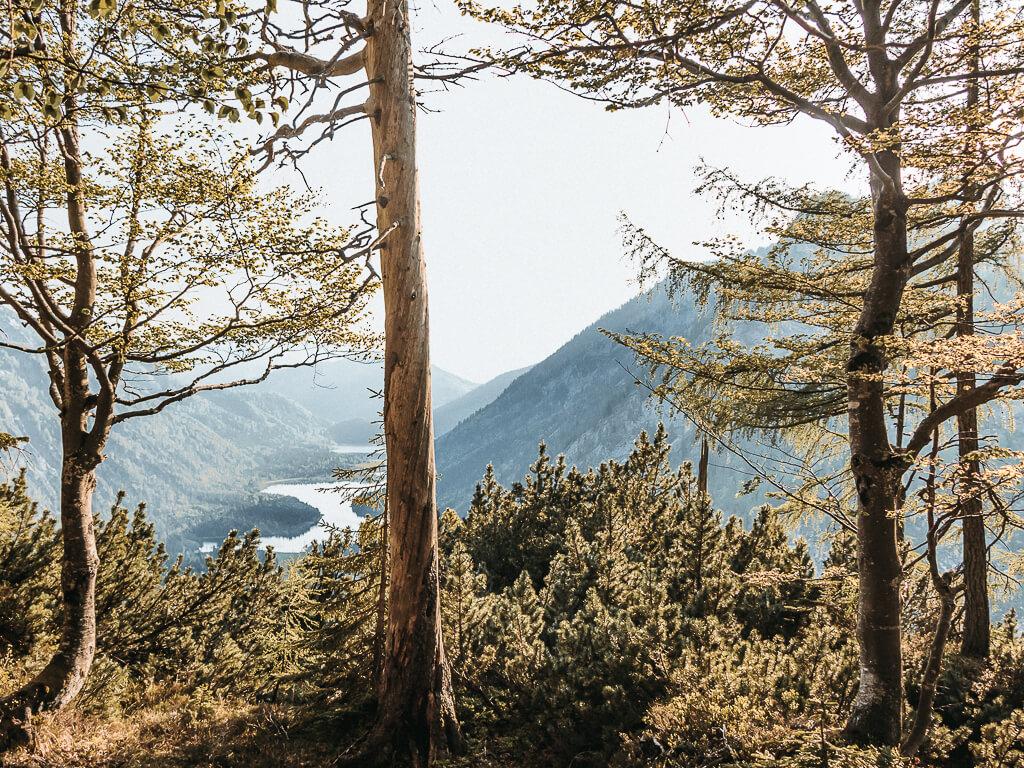 Wanderung zum Seekopf in Ruhpolding
